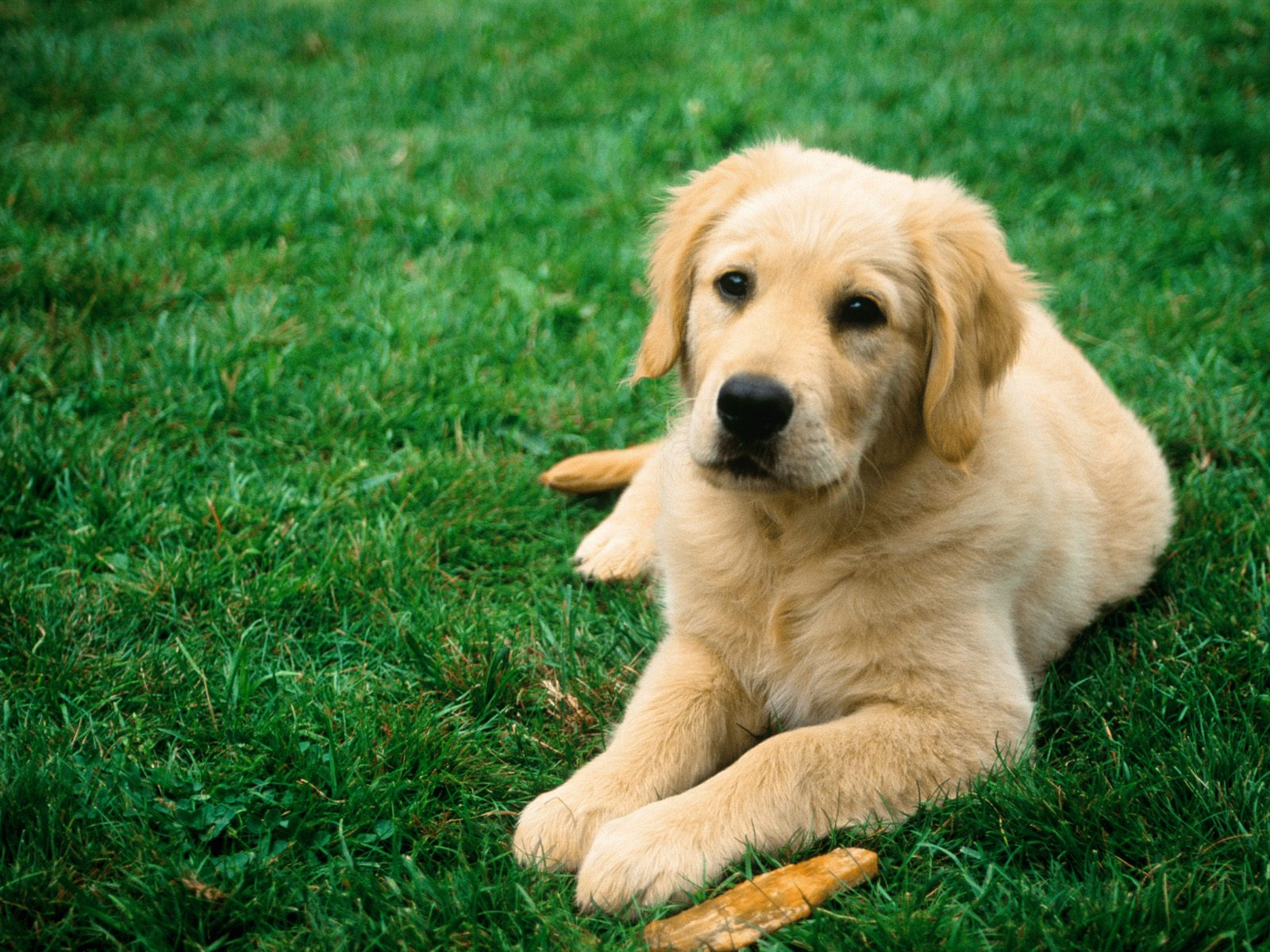A Guest Post From A Dog | Control Your Cash: Making Money Make Sense