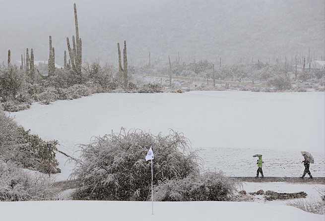 Two things that should never go together - blizzards and Saguaro cacti